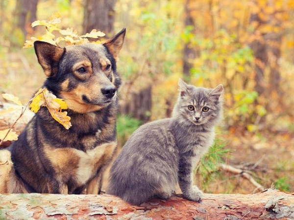 Difesa animali: Lega, bene ok in commissione, dialogare senza ideologie